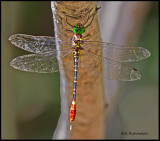 dragonfly multicolored.jpg