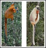 lemur page.jpg