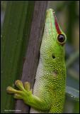 gecko portrait.jpg