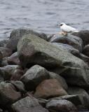 Ismås 7/12-2011 Hults hamn