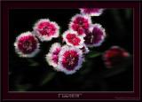 D3X4_5743_Lukas-0311-05.jpg