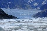 Visit to the LeConte Glacier