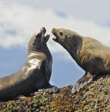 Memorable Mammals