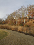 Moore's Mill CC
