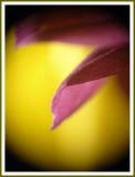 February 04 - Purple Petal