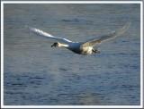 February 10 - Avian Aeronautics