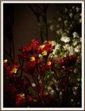 February 15 - Little Flowers