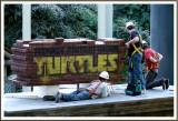 February 17 - Turtles