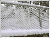 February 29 - Snow