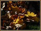 November 09 - Sunshine