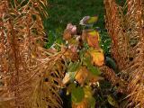 November 10 - Autumn Garden