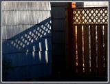 November 13 - Cool Shadows