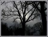 November 14 - Winter's Arrival