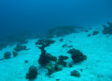 Exploring another reality - Dahab, Eel Garden diving site