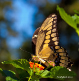 Butterfly October10