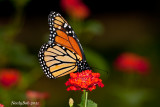 Monarch October24