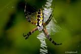 Spider June 8