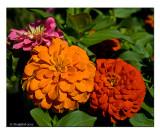 Flowers July 11