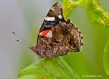Butterfly July 30