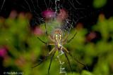 Spider September 3