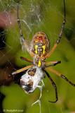 Spider September 4