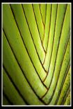 Leaf lines.jpg