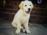 Puppy Chester.