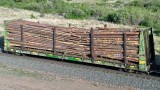 * MRL 63000 series Log Cars (22 photos)