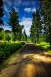 Bogor-4.jpg
