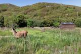 Llama farming