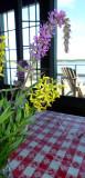 Wildflowers and Adirondack.jpg