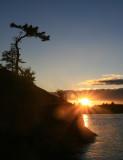 Gnarled Pine at Sunset.jpg