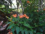 Flowers water color.jpg
