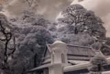 IR picture on Leica M8.2