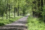 Birding trail near Melk dock
