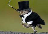 Banker-Owl.jpg