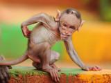 Monkey-George.jpg
