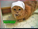 funny-pictures-cat-is-amish.jpg