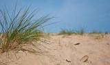 Sandgrass