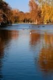 Reflections on Autumn