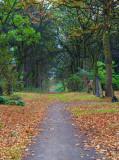A Colourful Walk