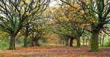 An Autumn Avenue