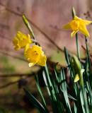 Wild spring blooms