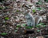 Squirrels In The Park