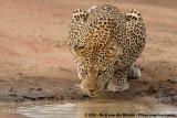 Mammals (Zoogdieren)