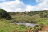 Montane wetland