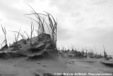 European Beachgrass at the Beach of Schier