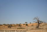 Lonesome dead tree