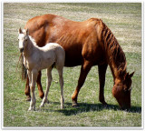 mother and foal portrait.