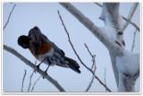 april surprise snow robin